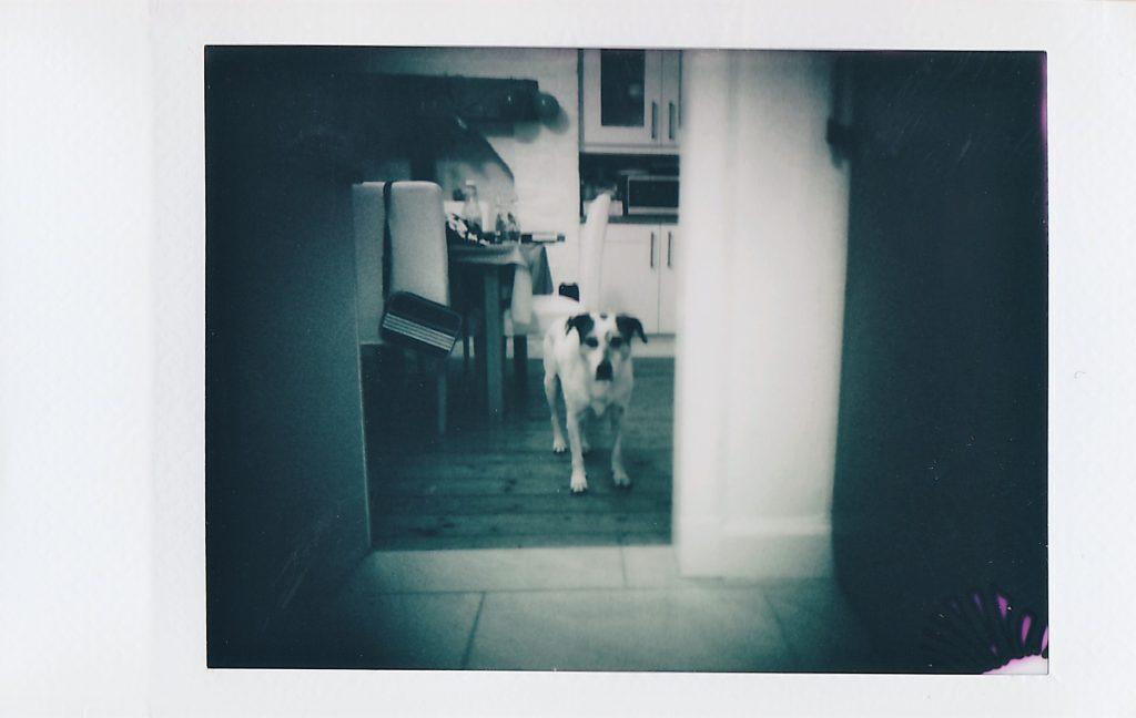 Dog du jour instax. Taken on Nons SL42